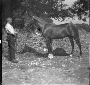 murphy horse
