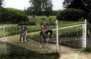 kenrick collection dogs