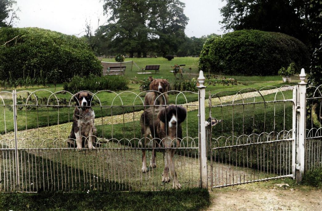 Did Your Family Own A Dog During The War Of Independence?